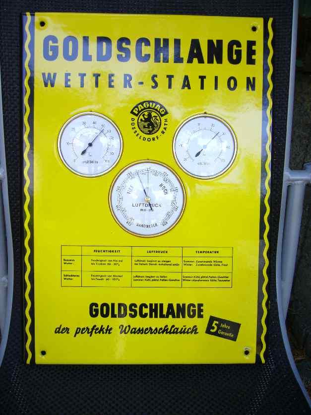 Goldschlange 4 001