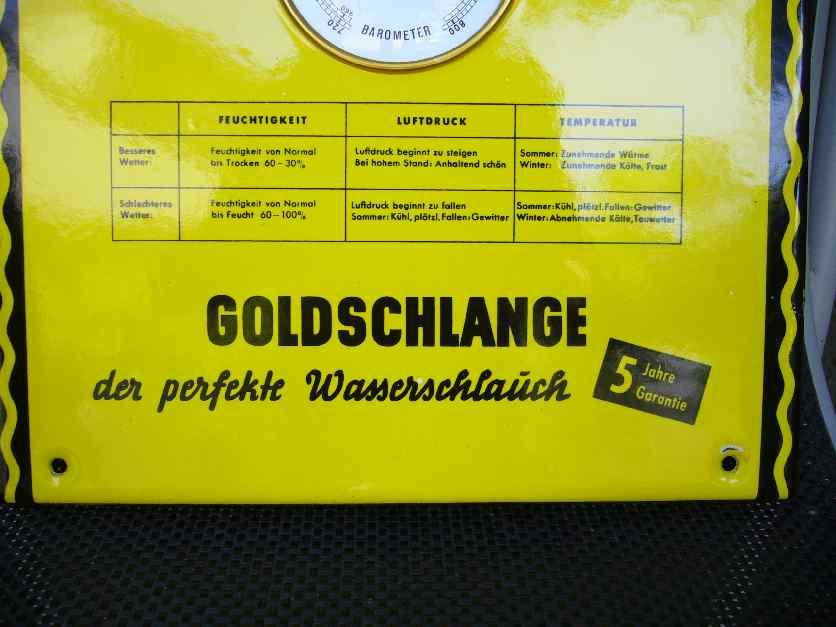 Goldschlange 4 004