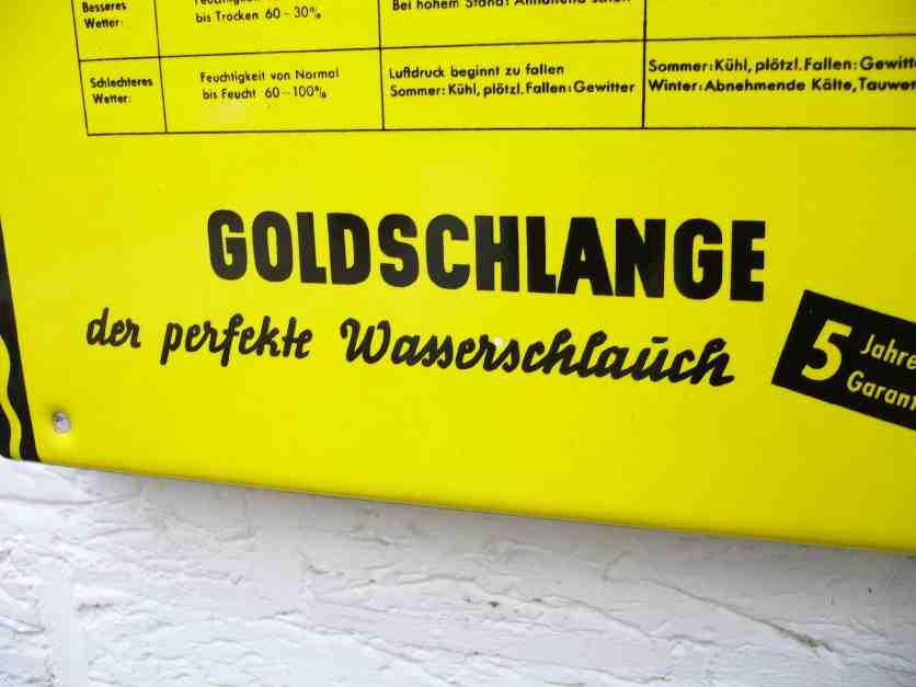 Goldschlange 005
